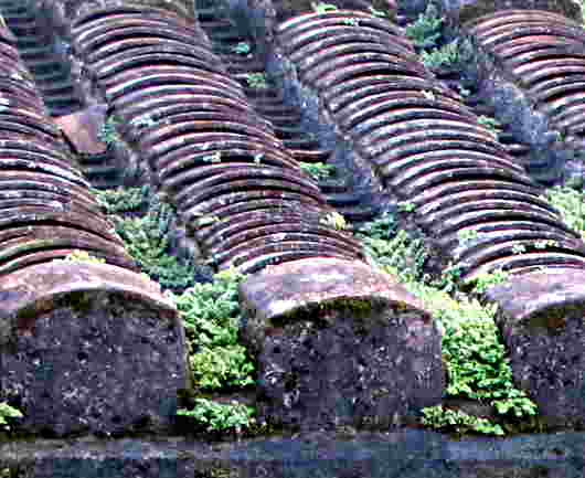 ancient clay tile roof