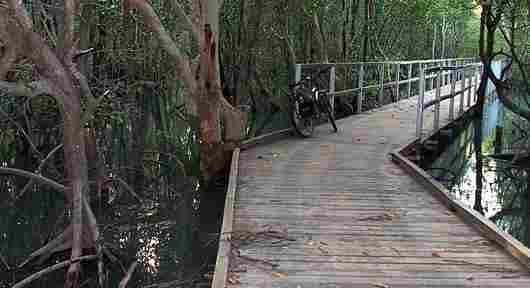 boardwalk through the mangroves high tide