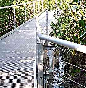 walkway deck through mangroves