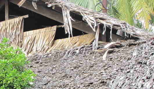 palm frond roof