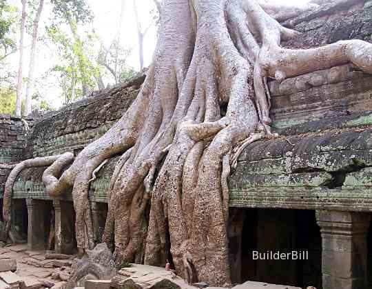 Ta Prom temple Angkor Wat
