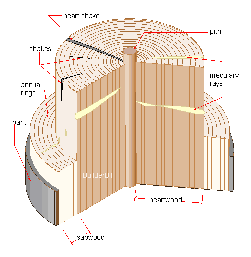 a section  through a tree